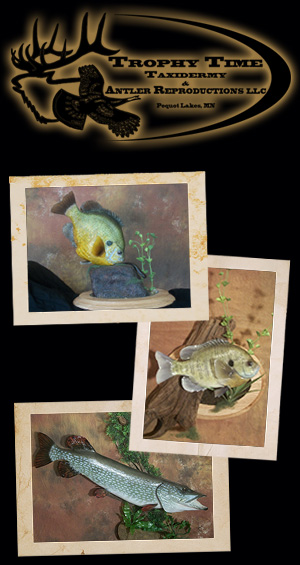Trophy Time Taxidermy Fish Reproductions